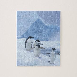 Adelie Penguins (Pygoscelis adeliae) on ice, Jigsaw Puzzle