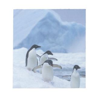 Adelie Penguins (Pygoscelis adeliae) on ice, Notepad