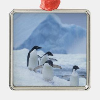 Adelie Penguins (Pygoscelis adeliae) on ice, Silver-Colored Square Decoration