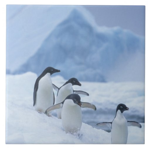 Adelie Penguins (Pygoscelis adeliae) on ice, Tiles
