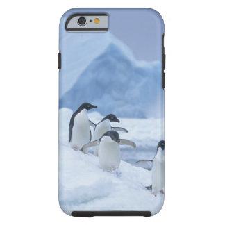 Adelie Penguins (Pygoscelis adeliae) on ice, Tough iPhone 6 Case