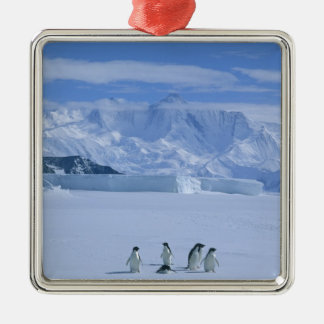 Adelie Penguins, Pygoscelis adeliae), Silver-Colored Square Decoration