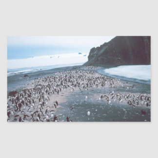Adelie Penguins Rectangular Sticker