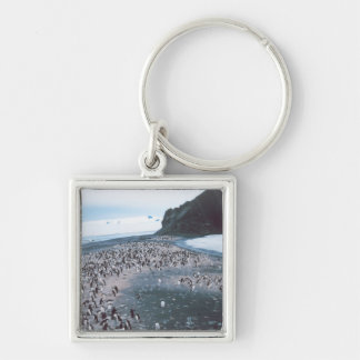 Adelie Penguins Silver-Colored Square Key Ring