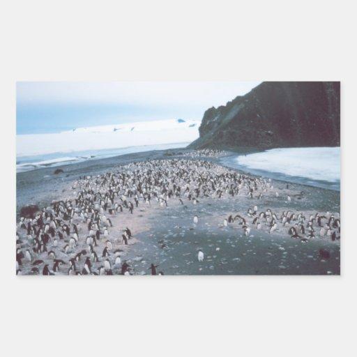 Adelie Penguins Stickers