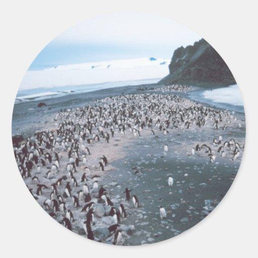 Adelie Penguins Round Stickers
