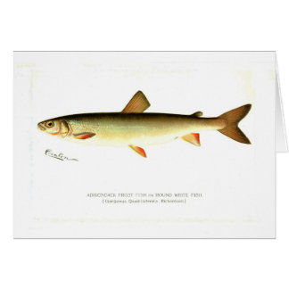 Adirondack Frost Fish Card