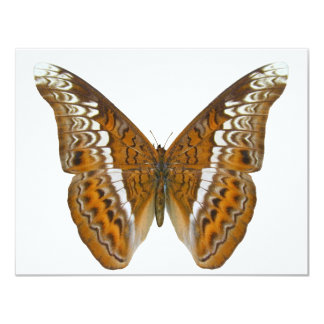Admiral Butterfly 11 Cm X 14 Cm Invitation Card
