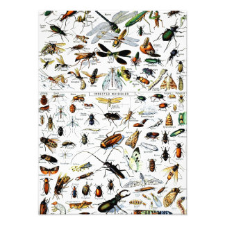 Adolphe Millot's Insectes Photo Print
