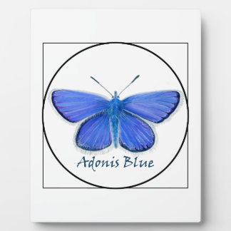Adonis Blue Butterfly Watercolor Painting Plaque