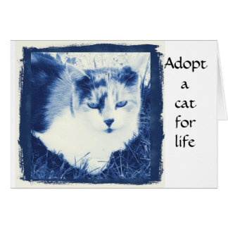 Adopt a cat greeting cards