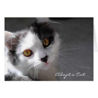 Adopt a Cat Stationery Note Card