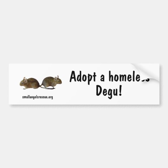 Adopt a homeless Degu! Bumper Sticker