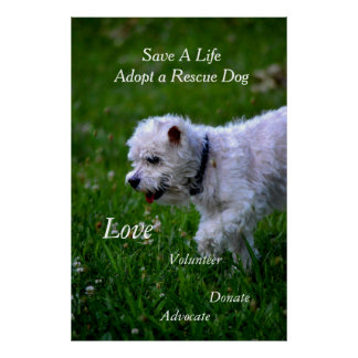 Adopt a rescue dog poster/poodle