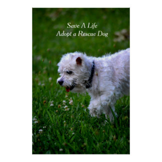 Adopt a rescue dog poster poodle print
