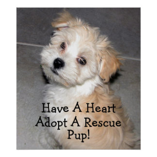 Adopt A Rescue Pup Posters
