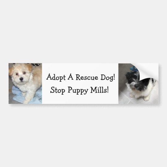 Adopt A Resuce Dog - Havanese Puppies Bumper Sticker