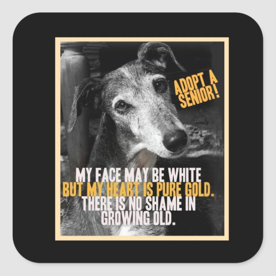 Adopt A Senior Animal Rescue Stickers