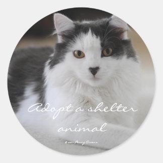 Adopt a shelter animal round sticker
