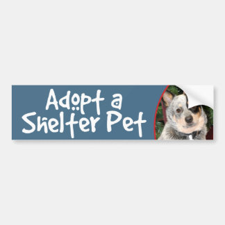 Adopt a Shelter Pet Australian Cattle Dog Bumper Sticker
