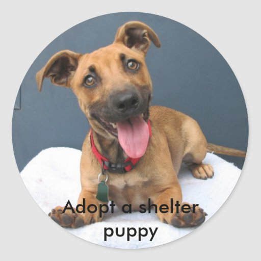 Adopt a shelter puppy 023 stickers