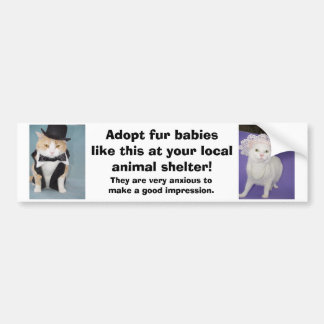 Adopt fur babies like this at your local shelter. car bumper sticker
