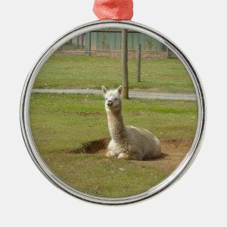 Adorable Alpaca Silver-Colored Round Decoration
