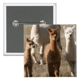 Adorable Alpacas 15 Cm Square Badge