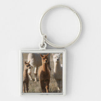 Adorable Alpacas Silver-Colored Square Key Ring