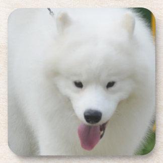 Adorable American Eskimo Dog Beverage Coaster