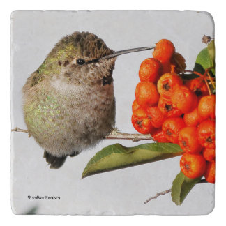 Adorable Anna's Hummingbird on the Berry Bush Trivet