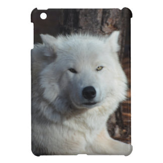 Adorable Arctic Wolf