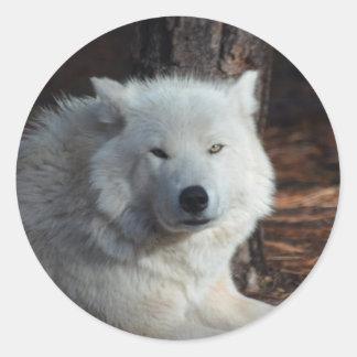 Adorable Arctic Wolf Round Sticker