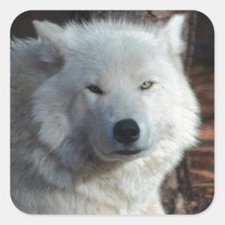 Adorable Arctic Wolf Square Sticker