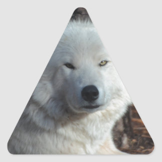 Adorable Arctic Wolf Triangle Sticker