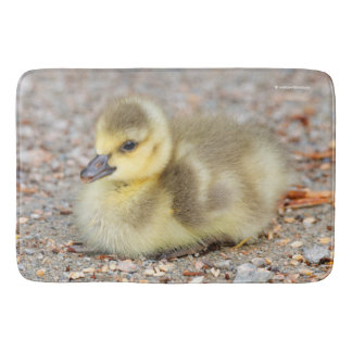 Adorable Baby Canada Goose on the Gravel Bath Mat
