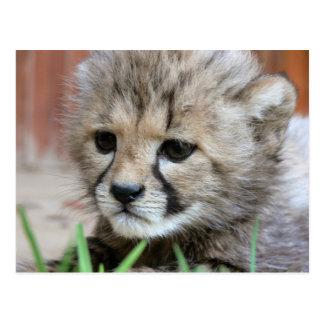 Adorable Baby Cheetah Postcard