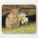 Adorable Baby Chipmunk with Daisy Mousemats