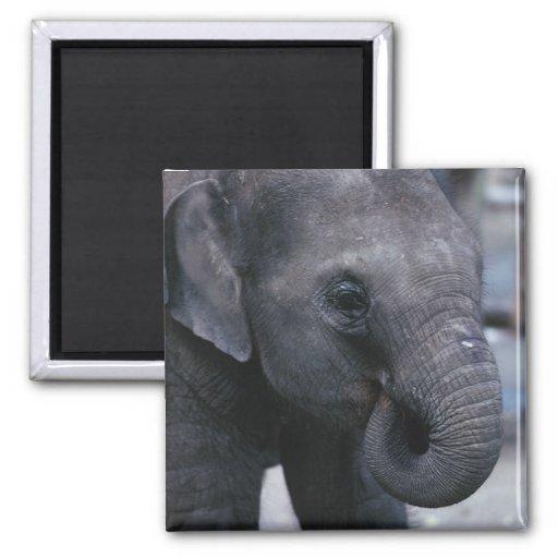 Adorable Baby Elephant Refrigerator Magnet