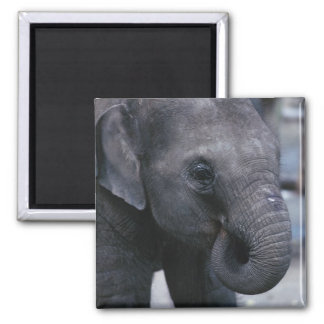 Adorable Baby Elephant Square Magnet