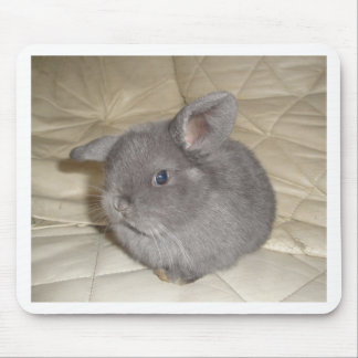 Adorable Baby Mini Lop Mouse Pad