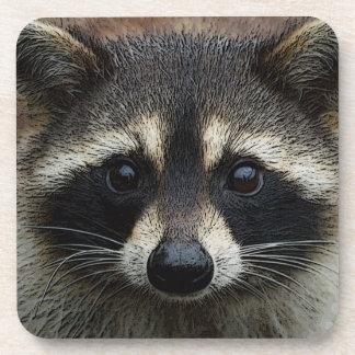 Adorable Baby Raccoon Face Mask Stare Coaster