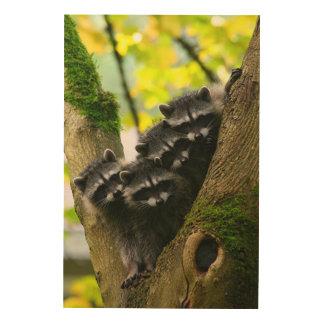 Adorable Baby Raccoons Wood Print