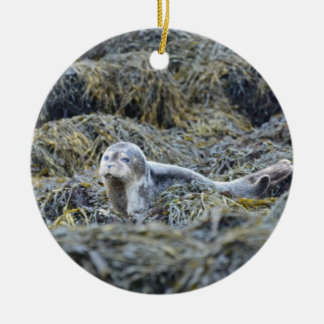 Adorable Baby Seal Ornament
