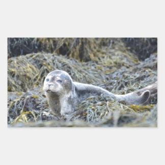 Adorable Baby Seal Rectangular Sticker