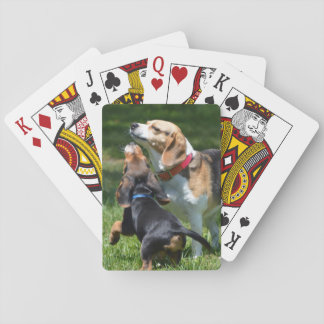Adorable Beagle Puppy and Mom Playing Cards