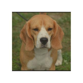 Adorable Beagle Wood Prints