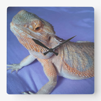Adorable Bearded Dragon Picture Blue Square Wall Clock
