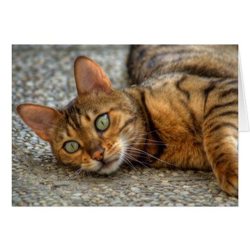 Adorable Bengal Cat Cards