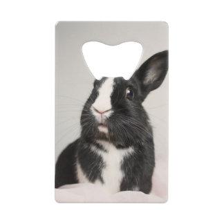Adorable Black and White Bunny Rabbit